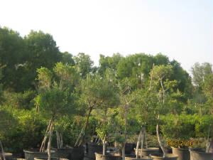 Trees Trees7 Jpg